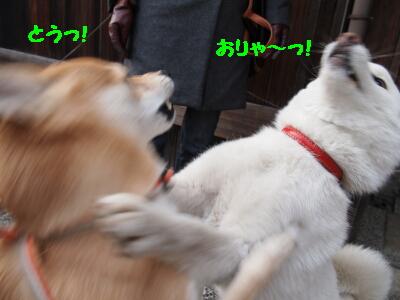 シロ先輩2