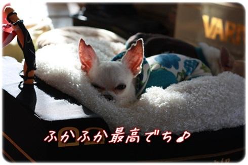 007_20120220195600.jpg
