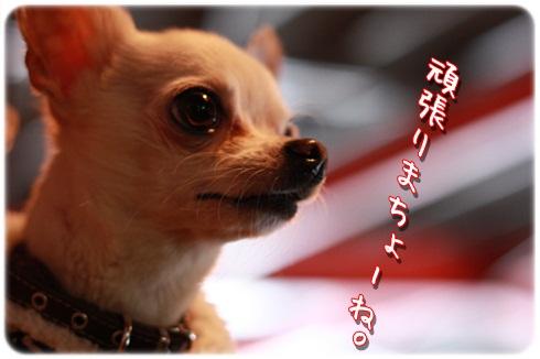 019_20120306191919.jpg