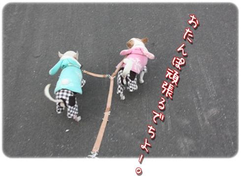 084_20120410192740.jpg