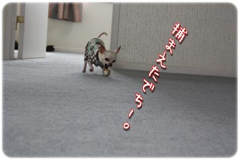 170_20120326195704.jpg