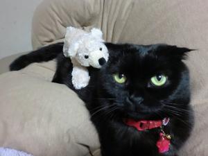 2サリーとクマ