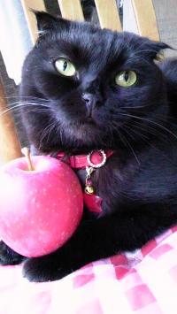 りんごもち小