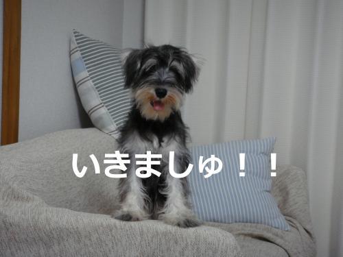 DSC01129+-+繧ウ繝斐・_convert_20110923230648