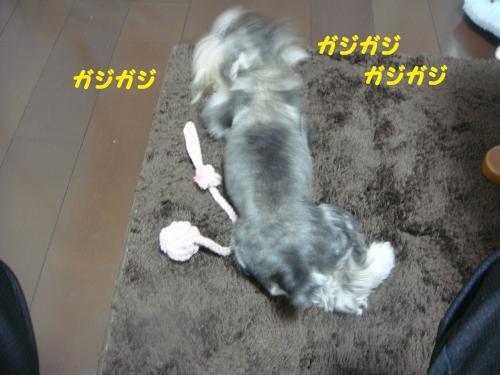 DSC02785・・・雲convert_20111023130831