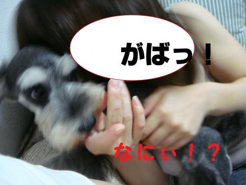 DSC01648(1)_convert_20111001000351.jpg