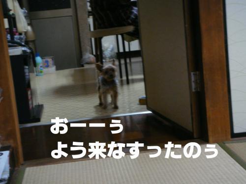 DSC01827(1)_convert_20111006140604.jpg