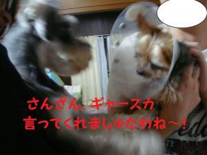 DSC01975_convert_20111006171858.jpg