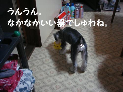 DSC01984_convert_20111006144034.jpg