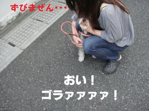 DSC02126(1)_convert_20111006004938.jpg