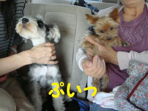 DSC02348(1)_convert_20111010075825.jpg
