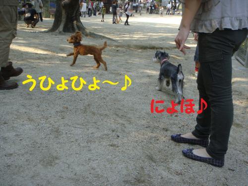 DSC02376(1)_convert_20111010122310.jpg