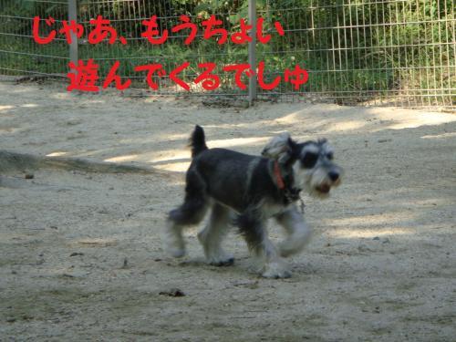 DSC02395_convert_20111010171140.jpg
