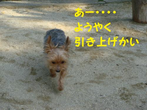 DSC02456(1)_convert_20111010215829.jpg