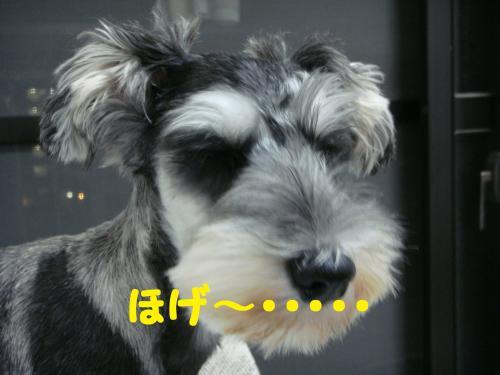DSC02702(1)_convert_20111016010249.jpg