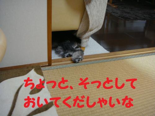 DSC02735(1)_convert_20111016222059.jpg
