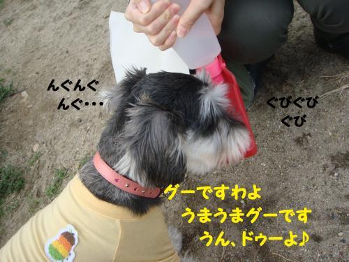 DSC02990(1)_convert_20111029000145.jpg