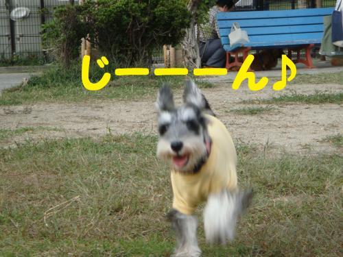 DSC03009(1)_convert_20111026233039.jpg