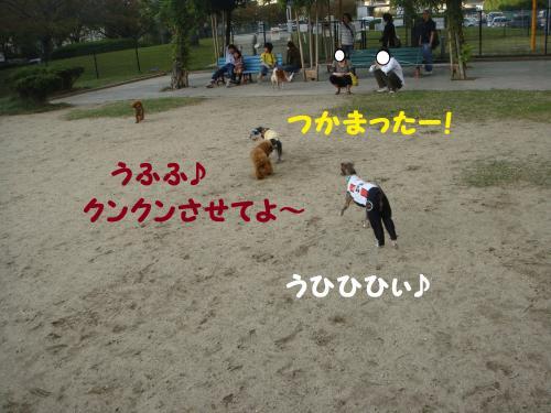 DSC03081(1)_convert_20111029002321.jpg