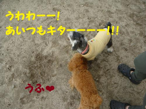 DSC03100(1)_convert_20111029002837.jpg