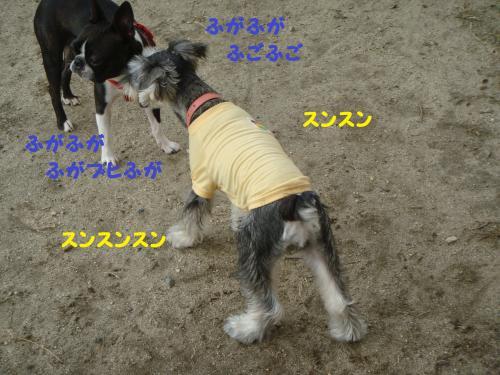 DSC03104(1)_convert_20111029003944.jpg