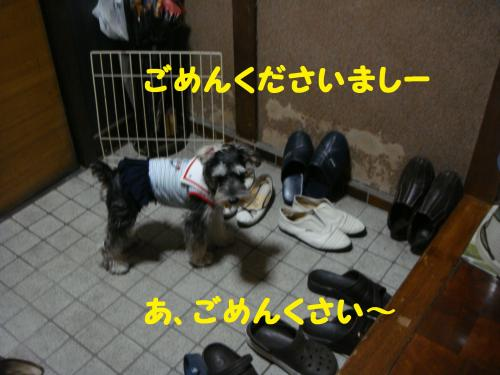 DSC03310(1)_convert_20111102224656.jpg