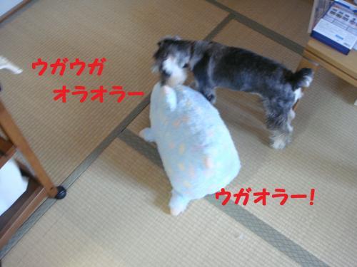 DSC03426_convert_20111113000425.jpg
