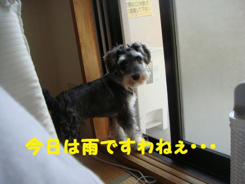 DSC03458(1)_convert_20111104230439.jpg