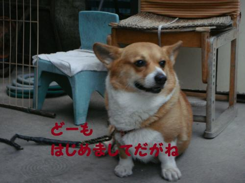DSC03593(1)_convert_20111105225429.jpg