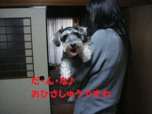 DSC03788(1)_convert_20111113221208.jpg