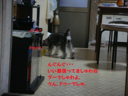 DSC03789(1)_convert_20111113223103.jpg