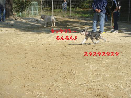 DSC03929(1)_convert_20111115214841.jpg