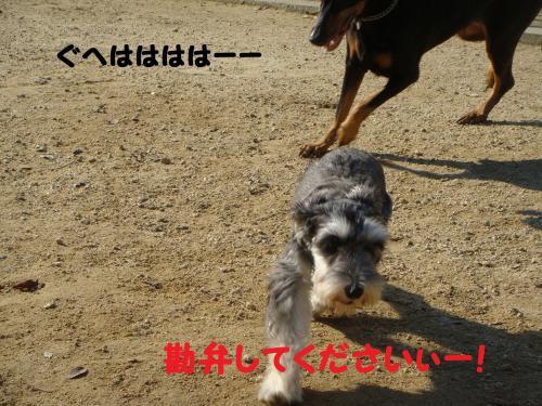 DSC04003(1)_convert_20111116000727.jpg