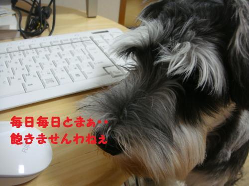 DSC04017(1)_convert_20111119011057.jpg
