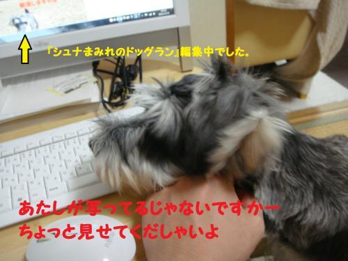 DSC04018(1)_convert_20111119011209.jpg