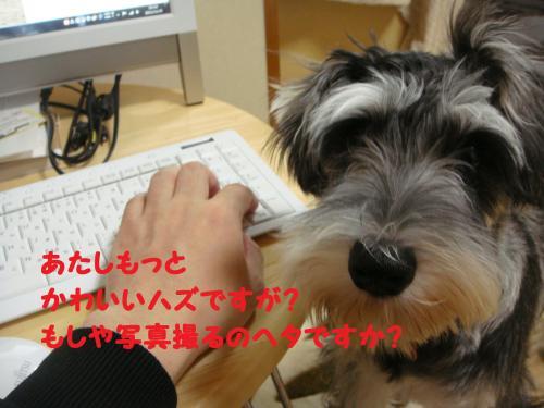 DSC04019(1)_convert_20111119011557.jpg