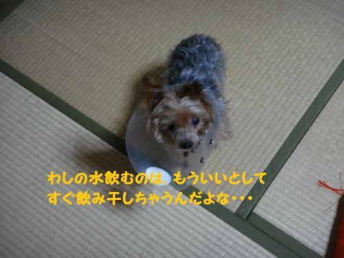 DSC04043(1)_convert_20111120012316.jpg