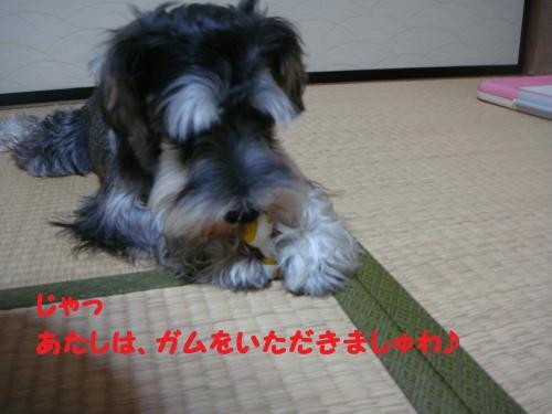 DSC04109(1)_convert_20111120013512.jpg