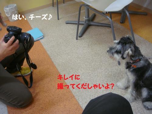 DSC04217(1)_convert_20111120221735.jpg