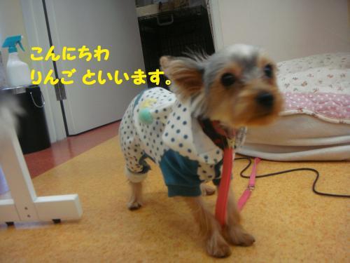 DSC04263(1)_convert_20111120213655.jpg