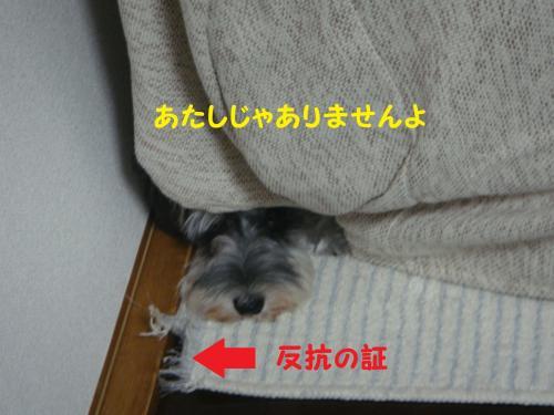 DSC04305(1)_convert_20111121225433.jpg