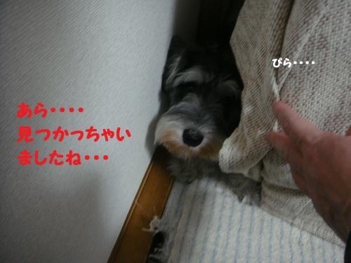 DSC04306@_convert_20111203105441.jpg