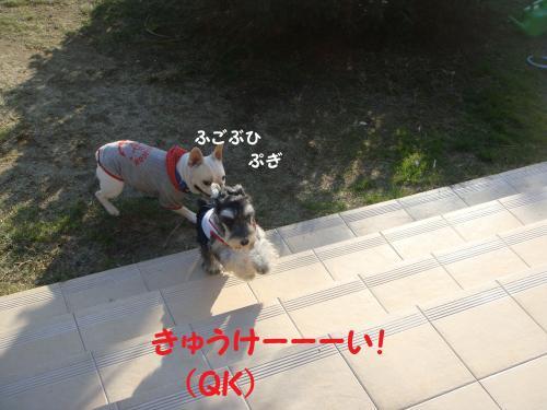 DSC04363(1)_convert_20111122223630.jpg