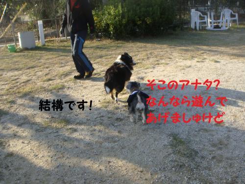 DSC04429(1)_convert_20111123215927.jpg