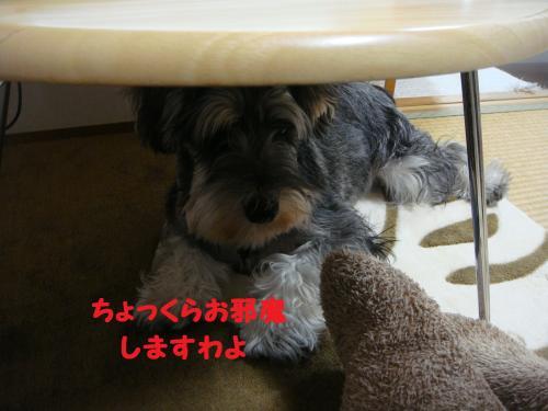 DSC04495@_convert_20111203104514.jpg