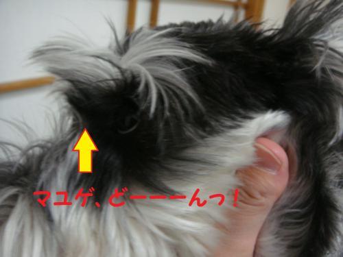 DSC04496(1)_convert_20111126000105.jpg