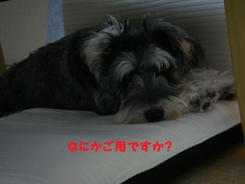 DSC04505@_convert_20111203104751.jpg
