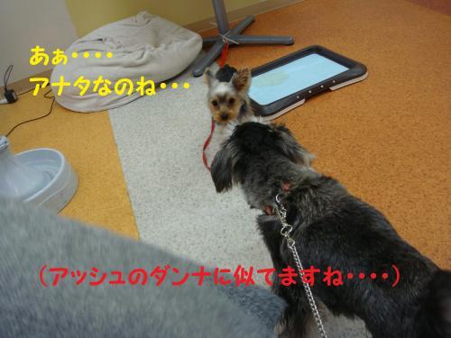 DSC04517(1)_convert_20111126225426.jpg