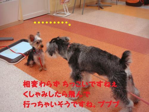 DSC04539(1)_convert_20111126233102.jpg
