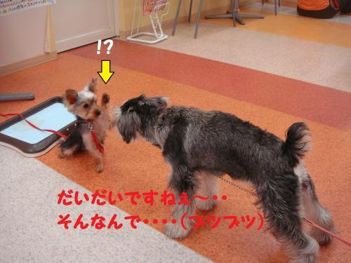DSC04540(1)_convert_20111126233141.jpg